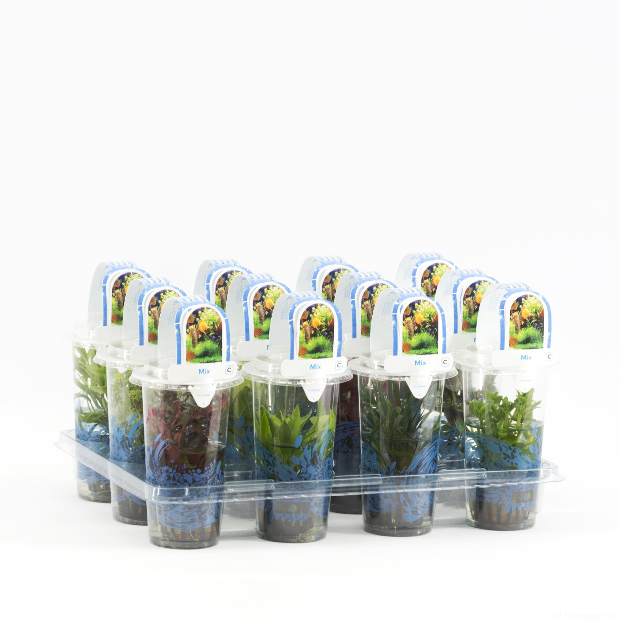B x Aquariumplanten mix in beker small 20180320113402