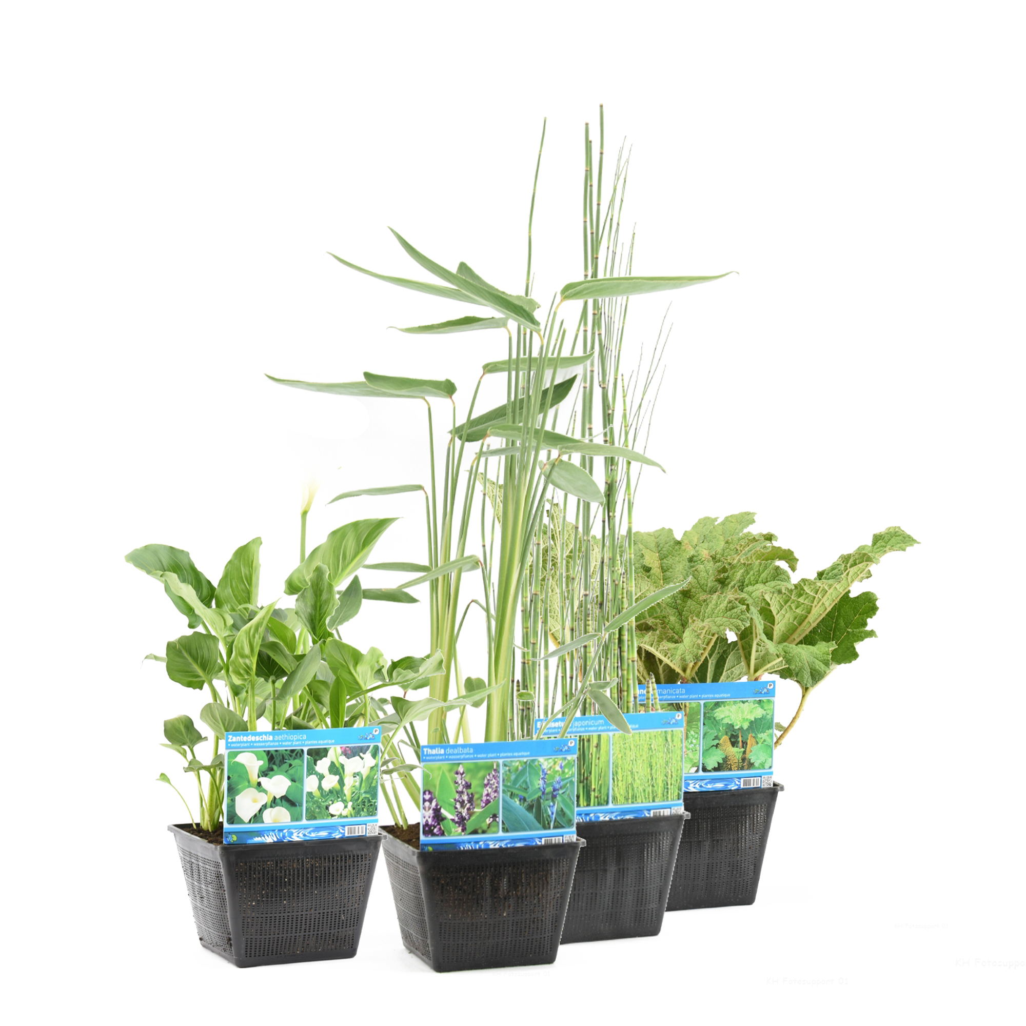 P28 waterplanten